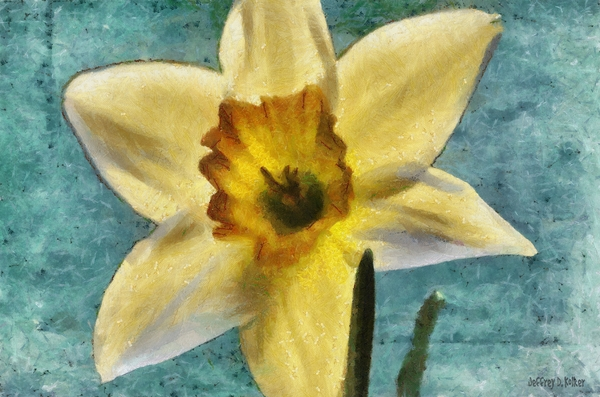 Daffodil Print by Jeff Kolker