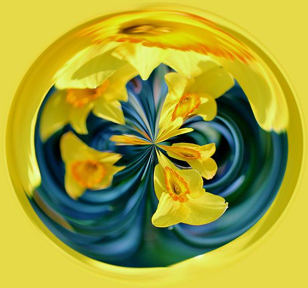 Daffodil Orb Print by Cynthia Guinn