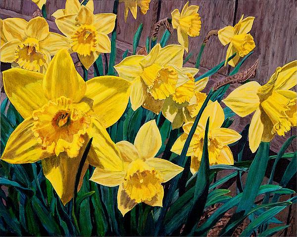 Daffodils Print by Charlie Harris