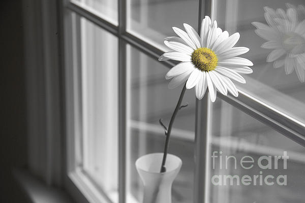 Daisy In The Window Print by Diane Diederich