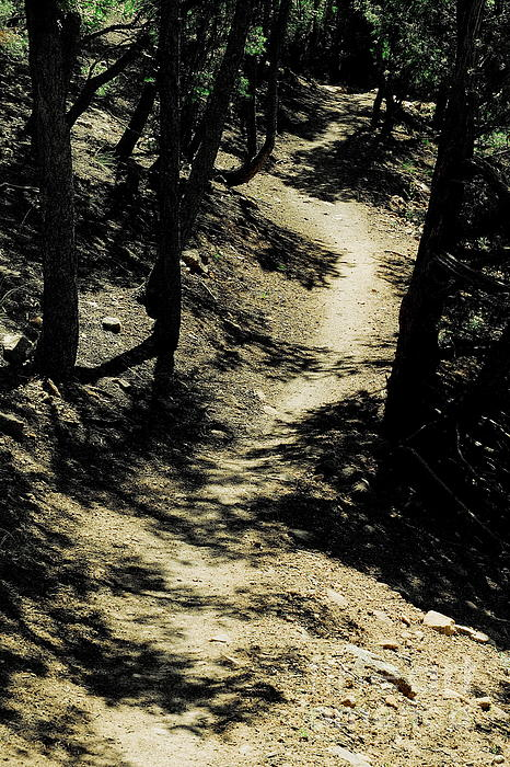 Tim Richards - Dale Ball Trail