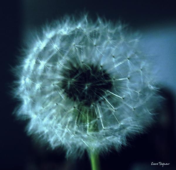 Leanne Seymour - Dandelion Blues