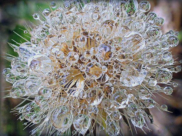 Suzy Piatt - Dandelion Seed Prisms