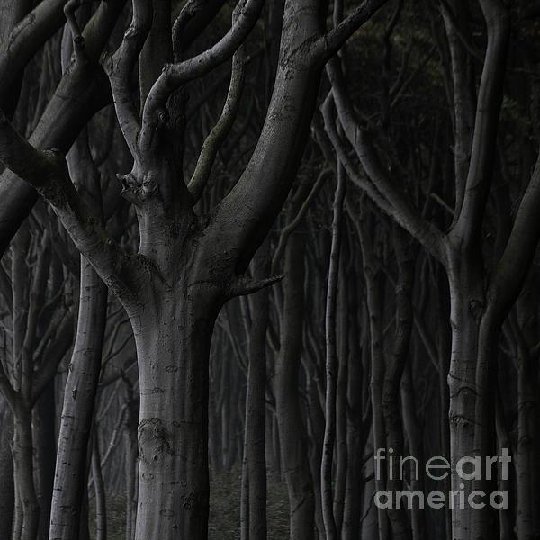 Dark Forest Print by Heiko Koehrer-Wagner