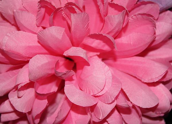 John Telfer - Dark Pink Colored Flower