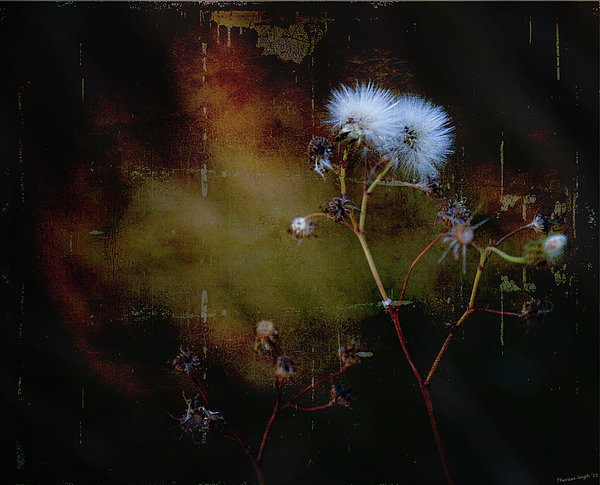 Theresa Tahara - Dark Thistle