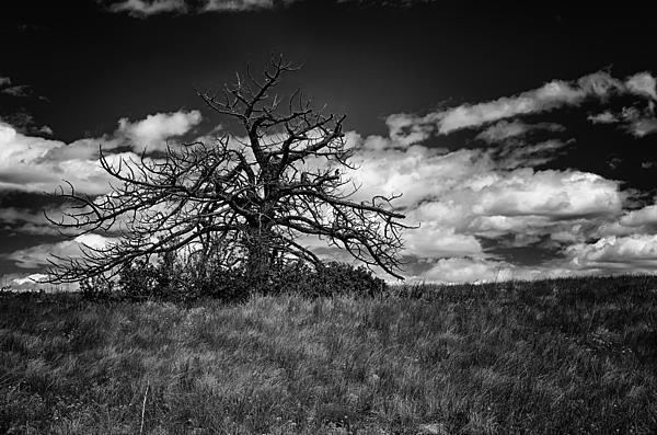 Dark Tree Print by Tony Boyajian