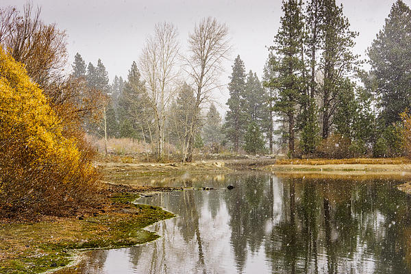 Janis Knight - Davis Lake First Snow