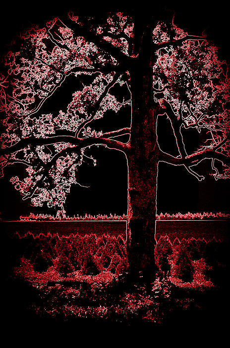 Day Into Night Print by David Bowman