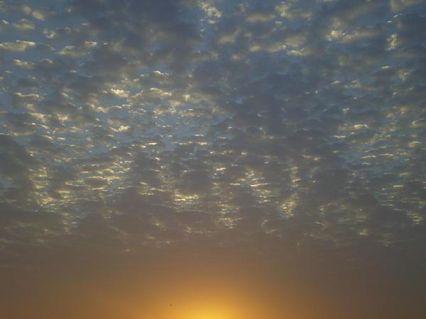 Daylight Awakening Print by Heather Jack