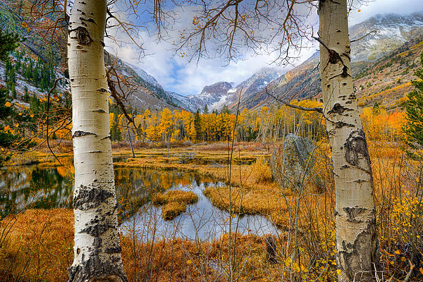 Dazzling Fall Foliage Print by Mark Whitt
