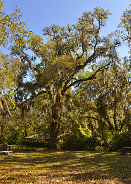 De Leon Springs - Classic Old Florida Print by Christine Till