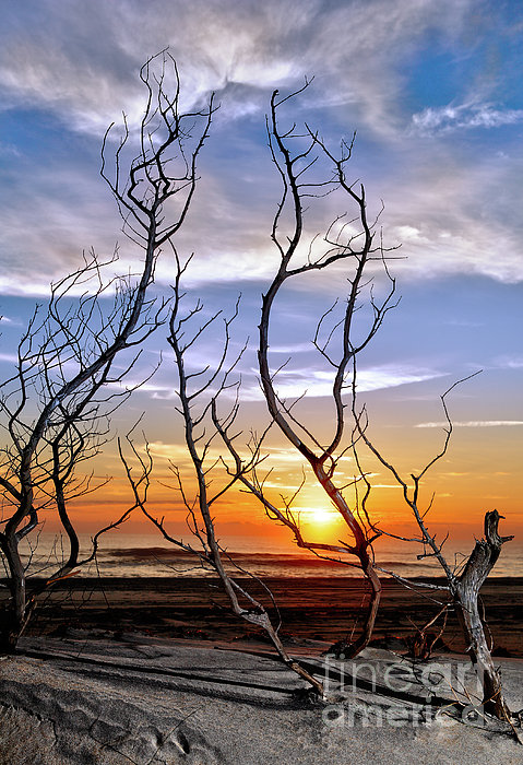 Dan Carmichael - Dead Bush Sunrise I - Outer Banks