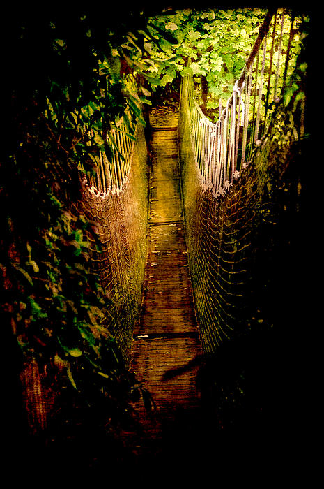 Deadly Path Print by Loriental Photography