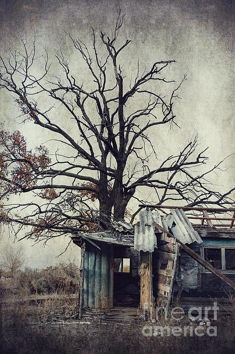 Decay Barn Print by Svetlana Sewell