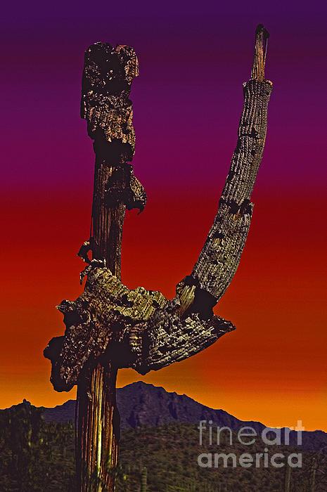 ImagesAsArt Photos And Graphics - Decaying Saguaro Cactus In Arizona Sunset