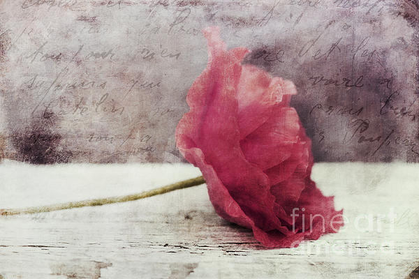 Decor Poppy Horizontal Print by Priska Wettstein