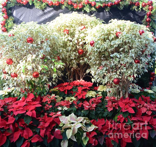 Decorated For Christmas Print by Kathleen Struckle