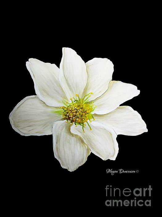 Decorative White Floral Flower Art Original Chic Painting Madart Studios Print by Megan Duncanson