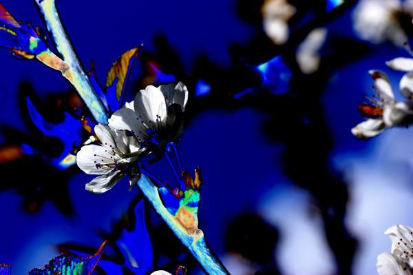 Deep Blue Print by Carol Lynch