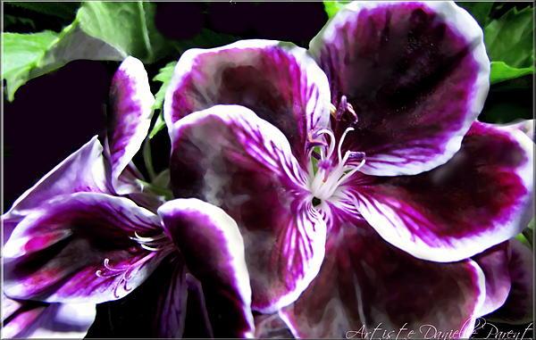 Deep Purple Vibrant Flower Macro Print by Danielle  Parent