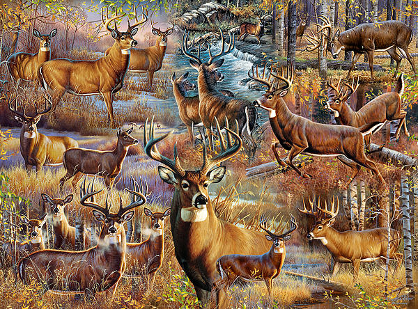 Deer Collage By Cynthie Fisher