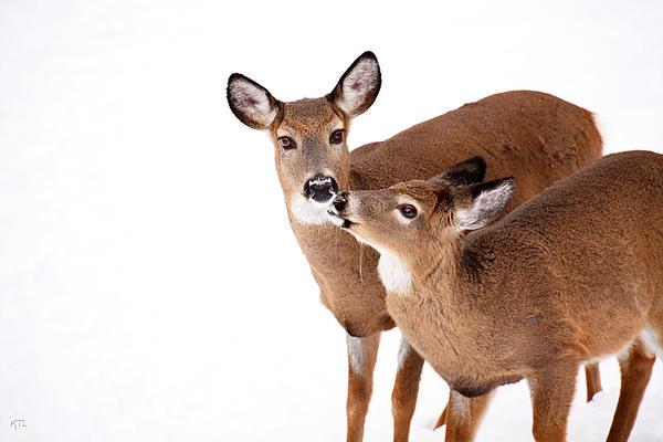 Deer Kisses Print by Karol  Livote