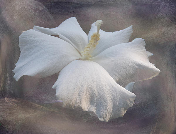 Kelley Freel-Ebner - Delicate Hibiscus
