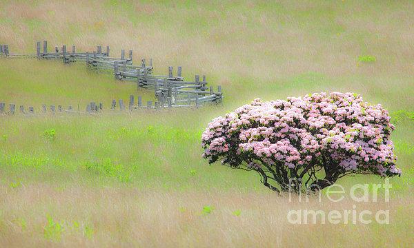 Delicate Meadow - A Tranquil Moments Landscape Print by Dan Carmichael