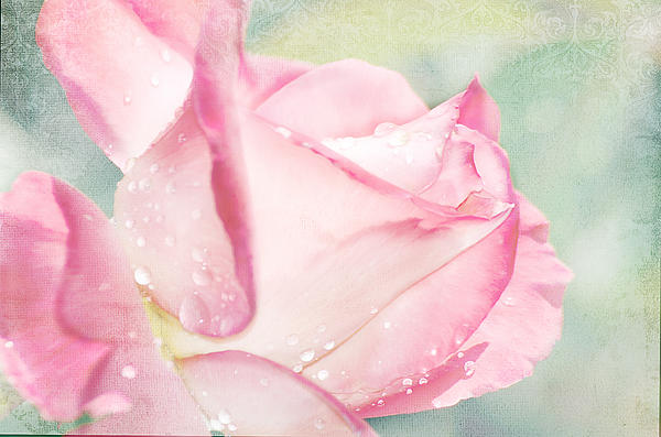 Delicate Rose Print by Camille Lopez
