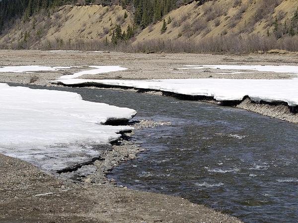 Denali Area River  Print by Tara Lynn