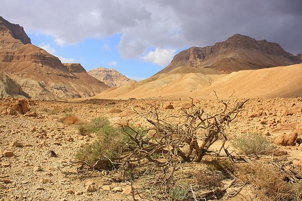 Guy Grobler - Desert Floods - Judean desert