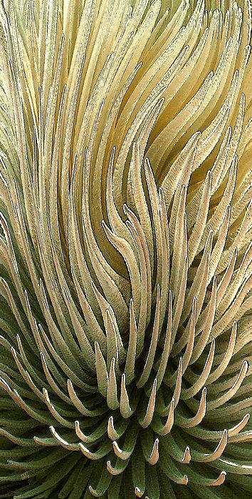 Desert Green Print by Ben and Raisa Gertsberg