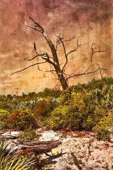 Desert Rose Print by Debra and Dave Vanderlaan
