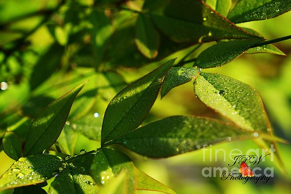 Dew drops in the morning print by jannice walker