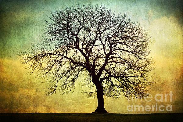 Digital Art Tree Silhouette Print by Natalie Kinnear