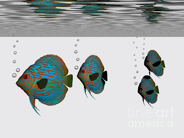 Discus Fish Print by Corey Ford
