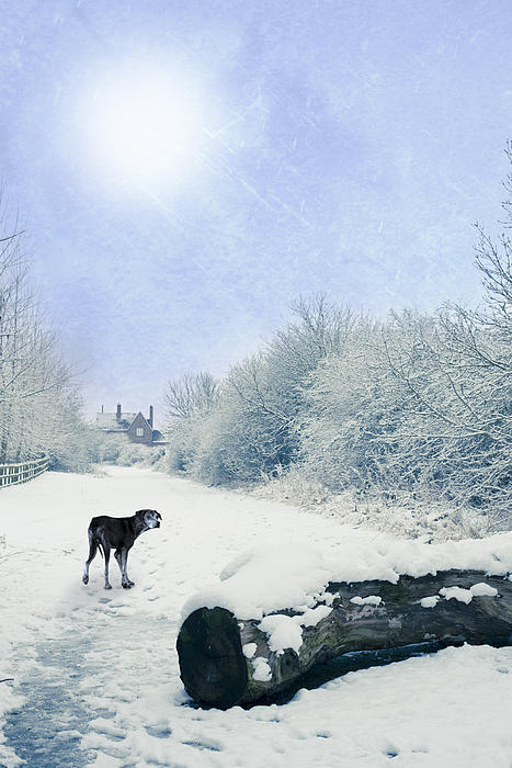 Dog Looking Back Print by Amanda And Christopher Elwell