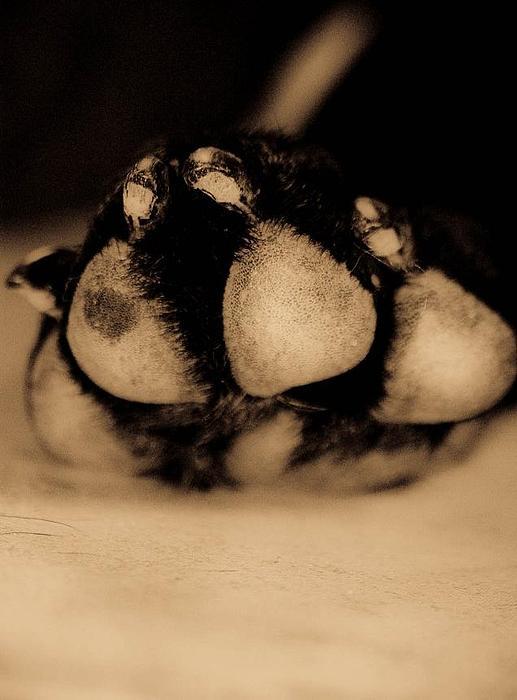 Dog Paw Print by Jamie Bishop