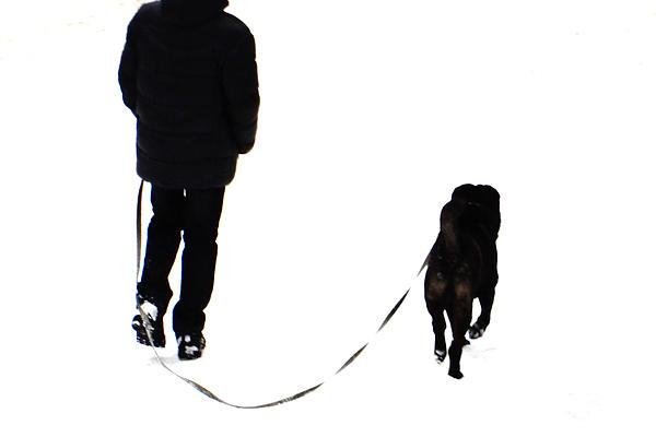 Svetlana Nilova - Dogs And Walks 1