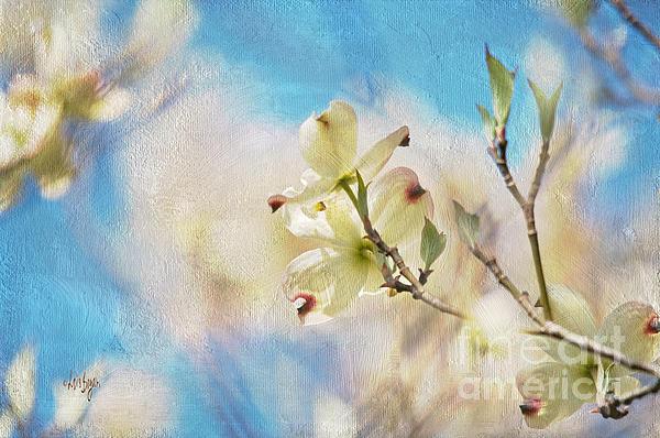 Dogwood Against Blue Sky Print by Lois Bryan