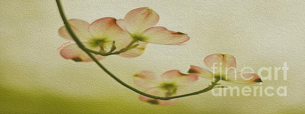 Dogwood Panoramic Print by Cheryl Young