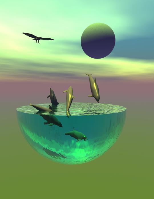 Claude McCoy - Dolphin heaven