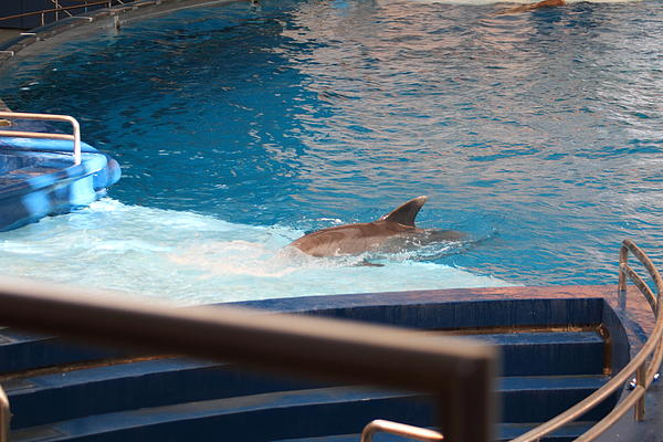 Dolphin Show - National Aquarium In Baltimore Md - 1212103 Print by DC Photographer
