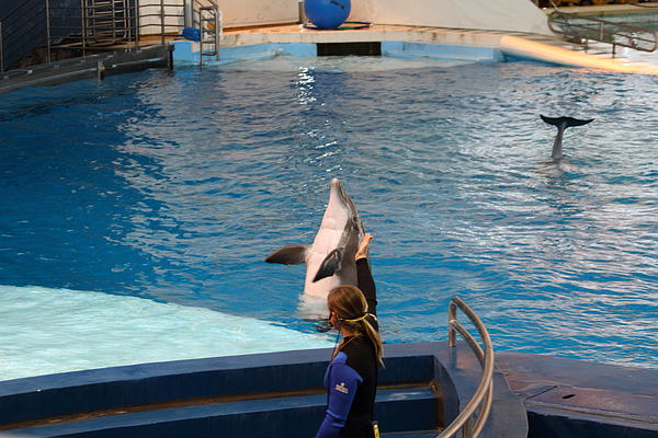 Dolphin Show - National Aquarium In Baltimore Md - 1212145 Print by DC Photographer