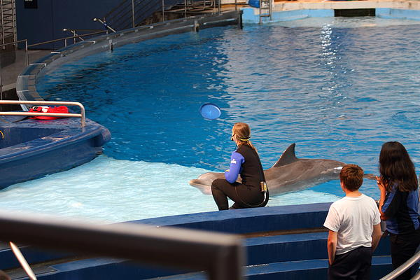 Dolphin Show - National Aquarium In Baltimore Md - 1212221 Print by DC Photographer