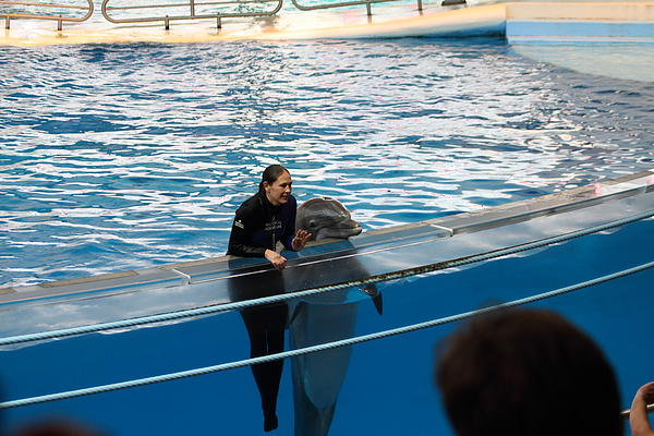 Dolphin Show - National Aquarium In Baltimore Md - 1212229 Print by DC Photographer
