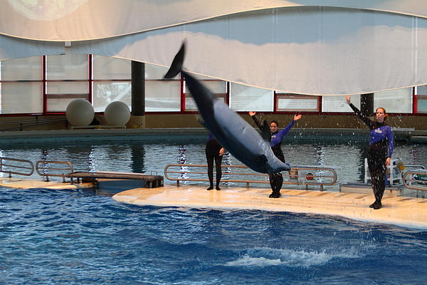Dolphin Show National Aquarium In Baltimore Md 1212275 By Dc Photographer