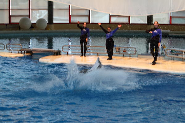 Dolphin Show - National Aquarium In Baltimore Md - 1212278 Print by DC Photographer