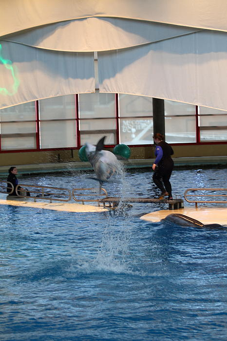 Dolphin Show - National Aquarium In Baltimore Md - 121267 Print by DC Photographer